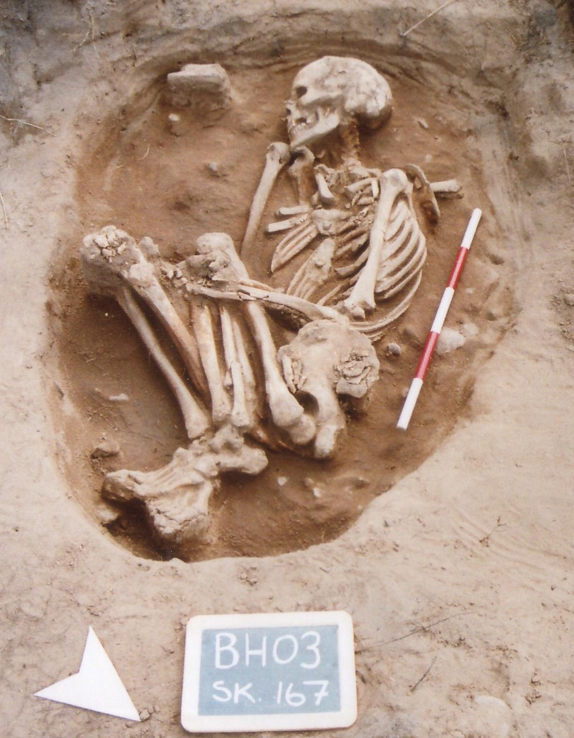 Skeleton been recorded