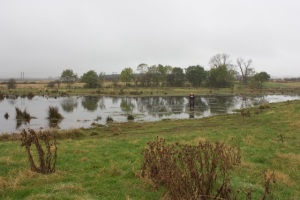 The wetland area next to Mound 2, taken in 2012.