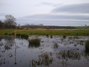 Surveying Transect C, across the re-filling wetland.