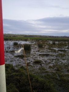A dynamic wetland landscape, all this was dry in the summer.