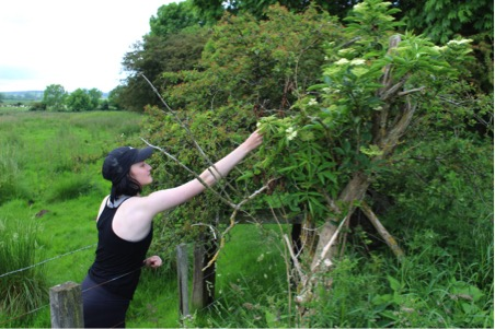 Charlie picking elderflower.jpg